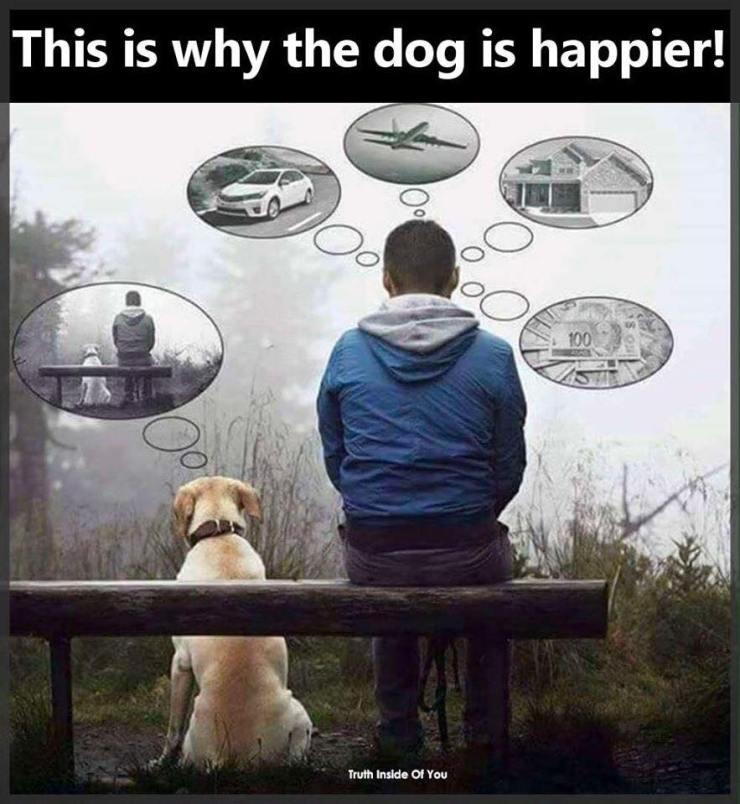 happier dog